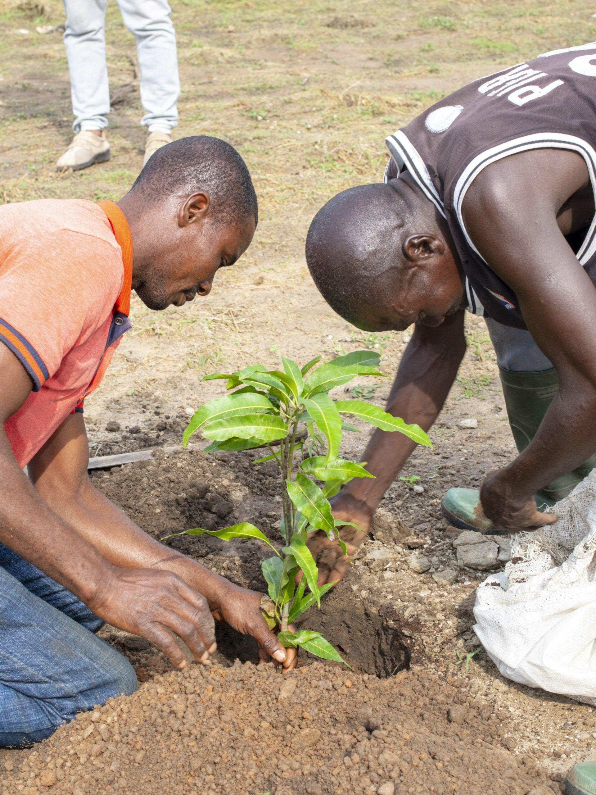 Journée de l'arbre 2021